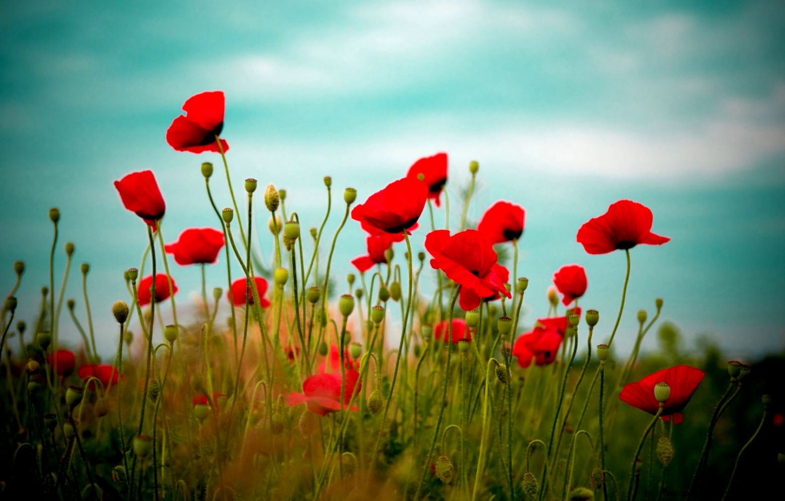 Wallpapers Of The Day Red Flowers HD  1920x1080 Red Flowers HD