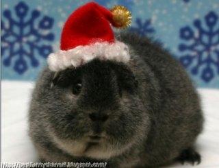 Very funny Christmas bunny.