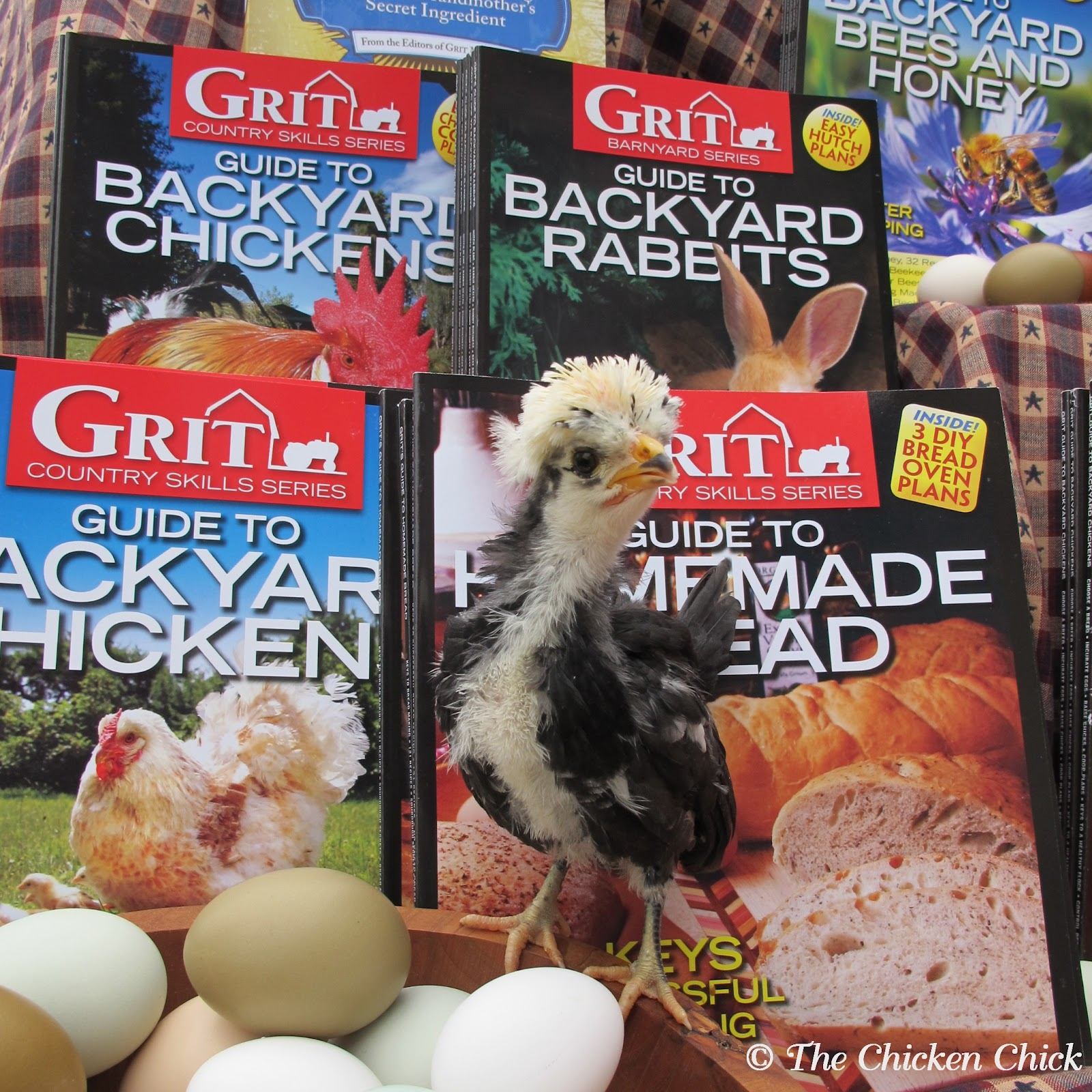 the chicken community chickens giveaway