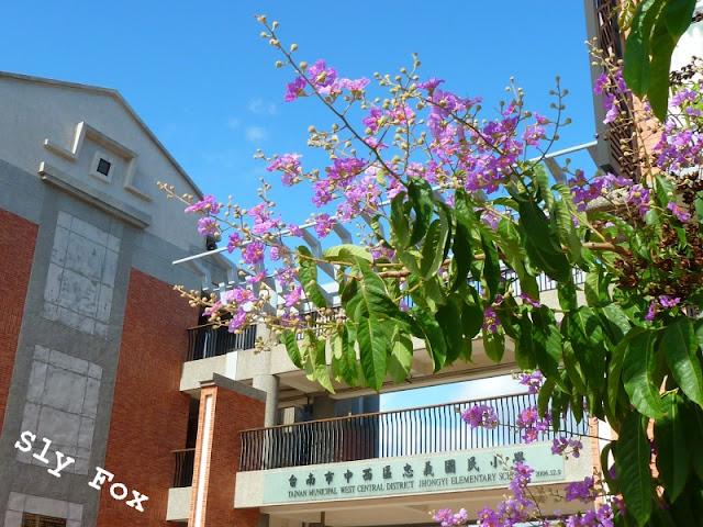 台南忠義國小紫薇