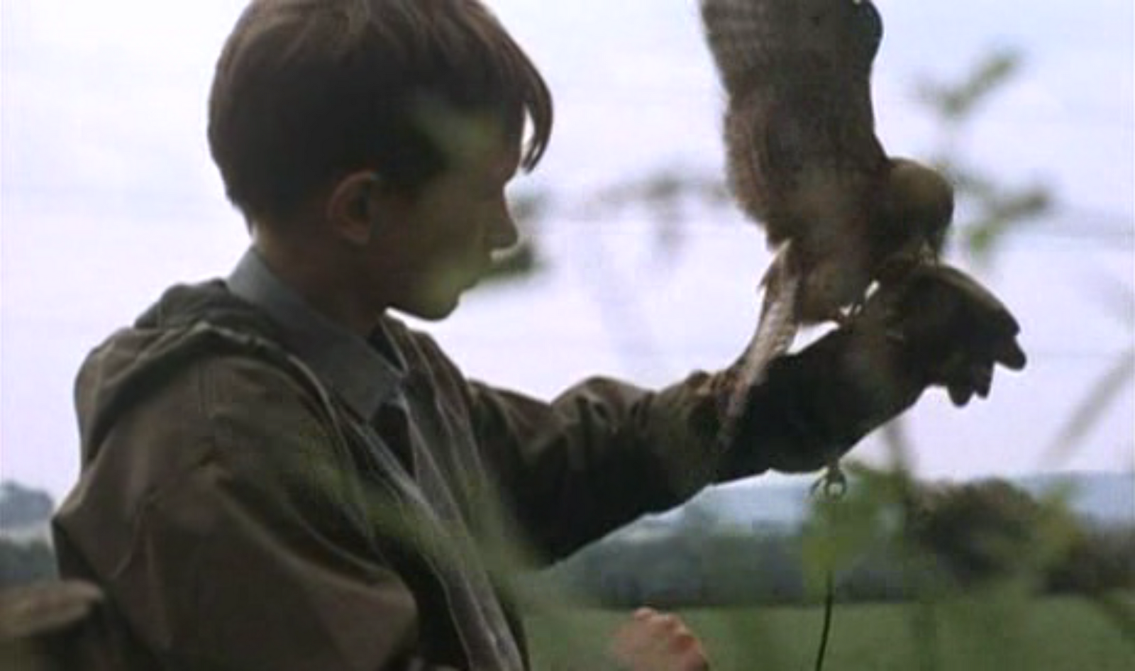 kes the film movie Watch online free download kes movie bullied at school and ignored and abused at home by his indifferent mother and older brother, billy casper.