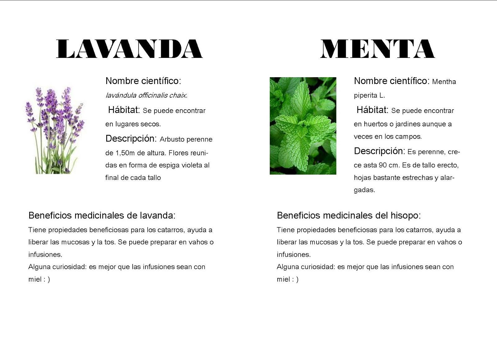 Plantas medicinales de puertomingalvo for Para q sirven las plantas ornamentales