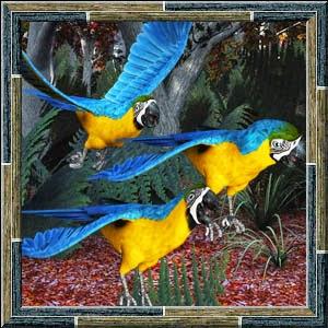 http://3.bp.blogspot.com/-pN37oi7X-Fk/VOf33nWMsAI/AAAAAAAADGE/Y7GKcp9vp2E/s1600/Mgtcs__Parrots.jpg