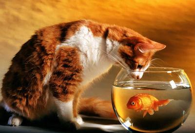 Gato esperando la oportunidad para comerse al pez - Cat and fish