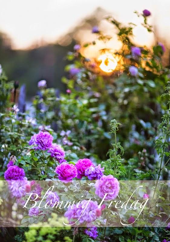 http://blandrosorochbladloss.blogspot.se/2014/11/det-basta-med-november.html