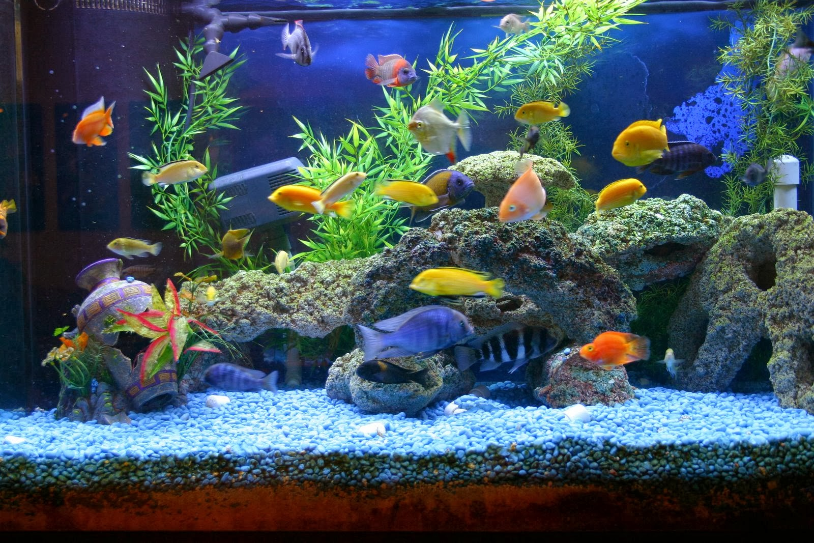 Various Types Of Aquarium Accessories And Devices