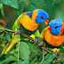 Two Birds HD Nature Wallpaper