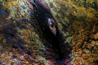 Inside the Volcano Looks like an Eye - Iceland Reykjavik