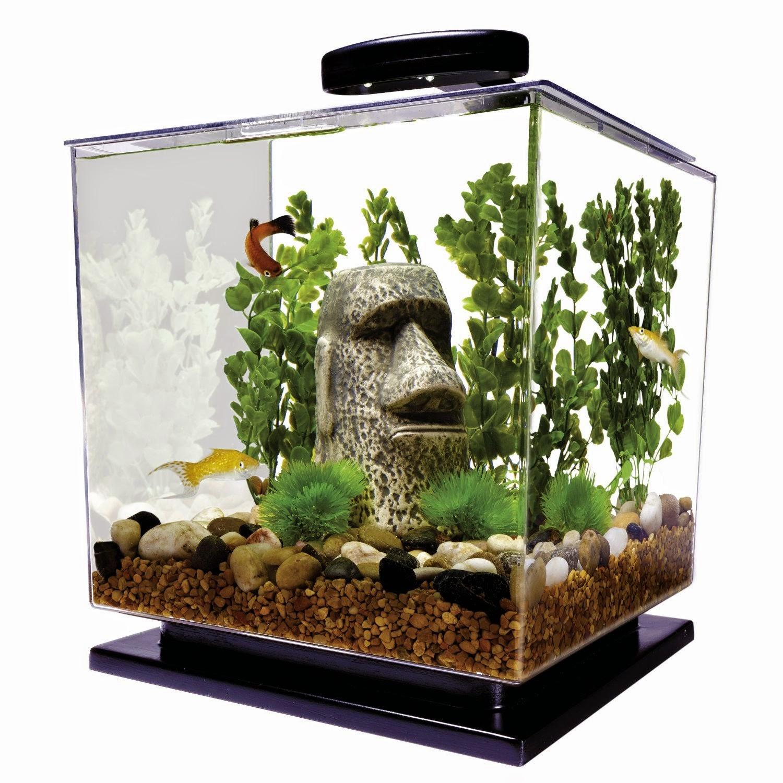 I love betta fish betta fish tank betta aquariums for Do betta fish need a filter