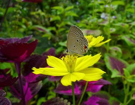 Mùa xuân nên cẩn thận viêm mũi dị ứng với phấn hoa và côn trùng