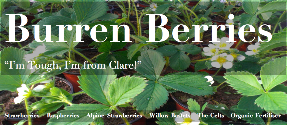 Burren Natural Strawberry Plants