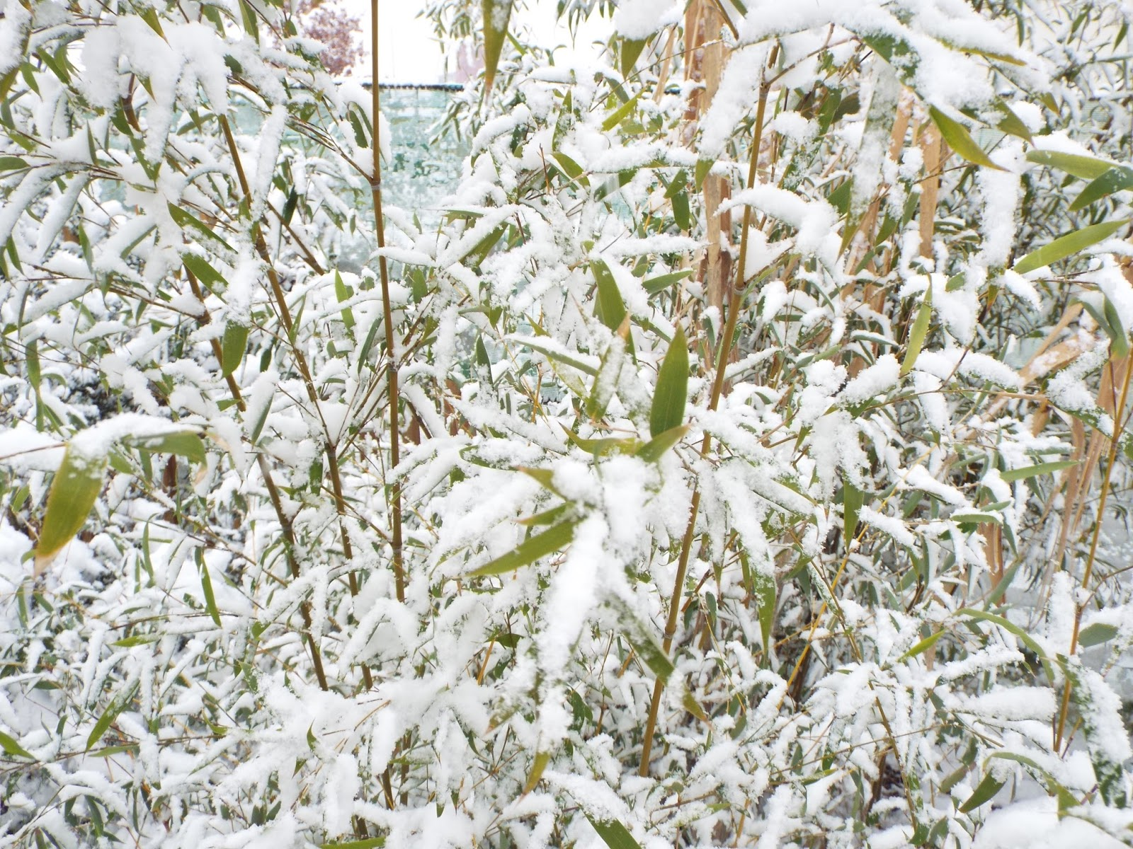 Jardin aux quatre saisons 3 ans jour pour jour et tu es for Jardin aux plantes