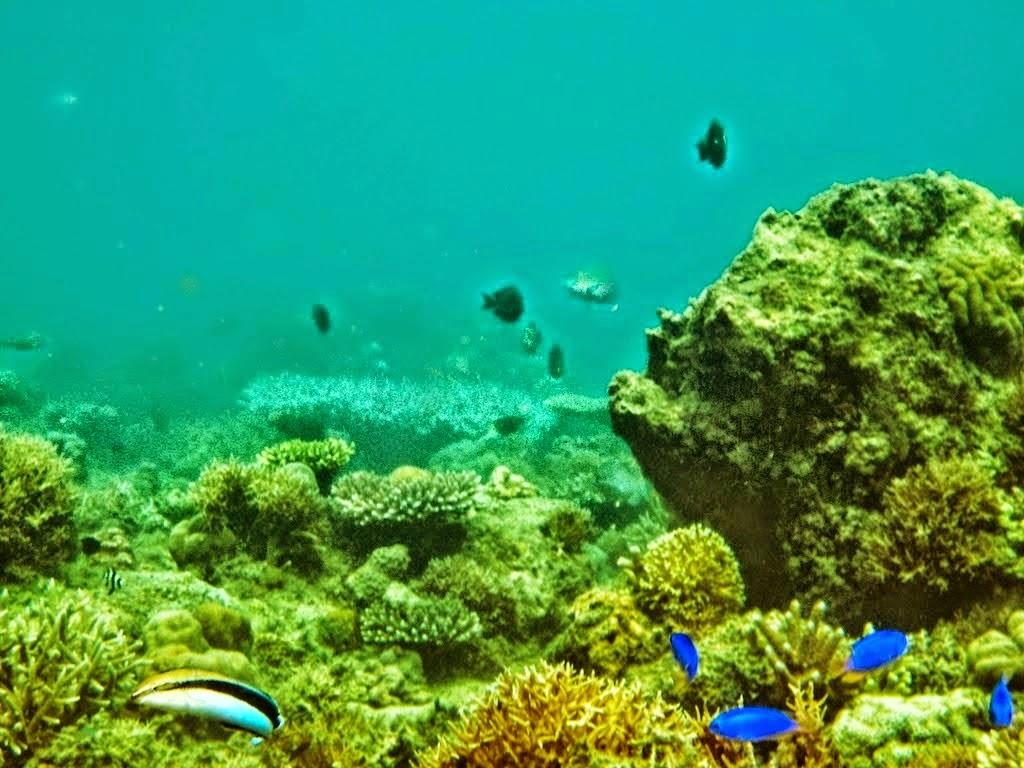 Keindahan bawah laut Teluk Banyu Biru