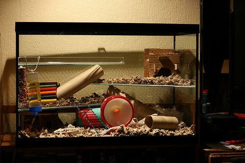 Glass Hamster Cage