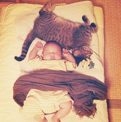 foto kucing bernama toco dan seorang bayi 03