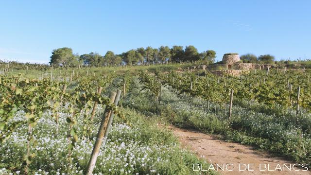 Gramonan viljelmiä - www.blancdeblancs.fi