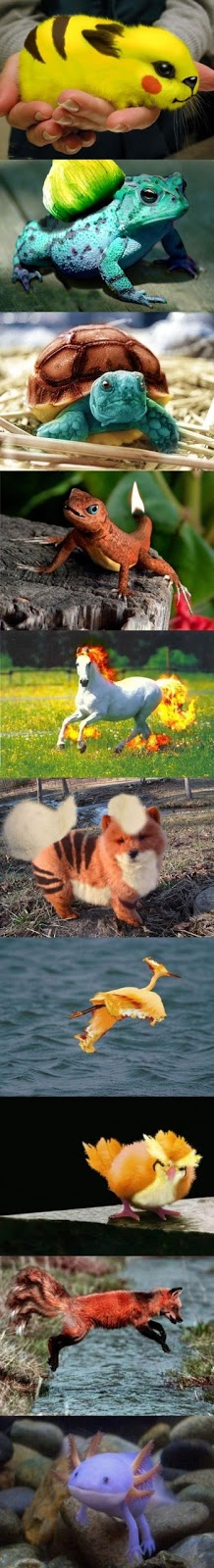 real pokemon in real world