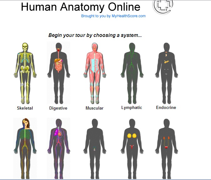 bodies systems