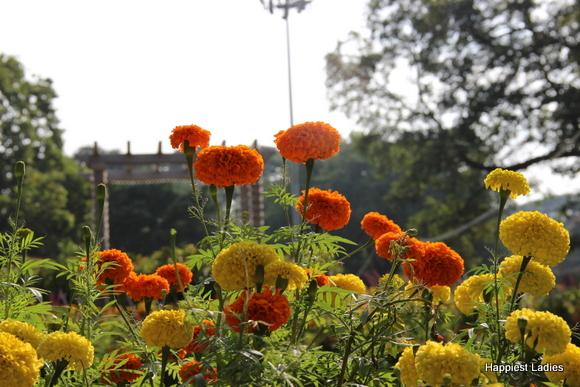 mysore dasara 2015 flower show7