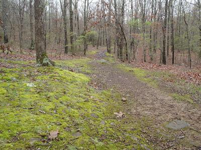 Finger Park Trail, Fayetteville, Arkansas.