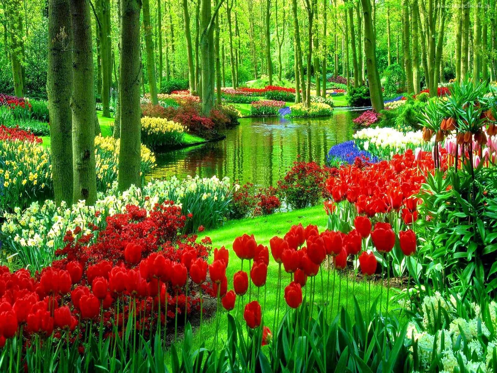 http://www.tapeciarnia.pl/138264_las_tulipany_woda.html