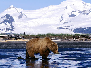 Brown Bear Wallpaper
