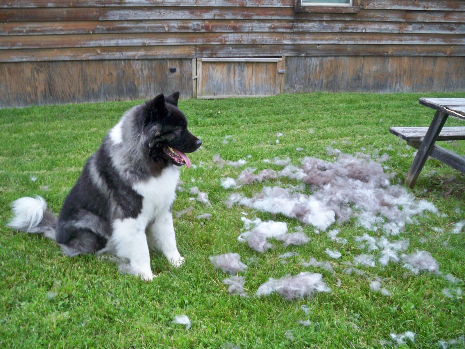 Big Hairy Dogs