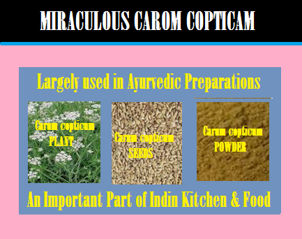 Carom Copticum a miraculous Herbal