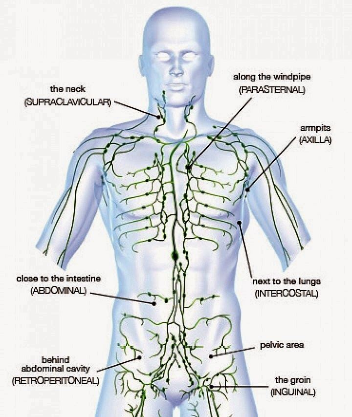 4 Steps for treating Lymphatic System ~ Academy of Family Health