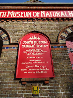 Booth Museum of Natural History - closed Thursdays