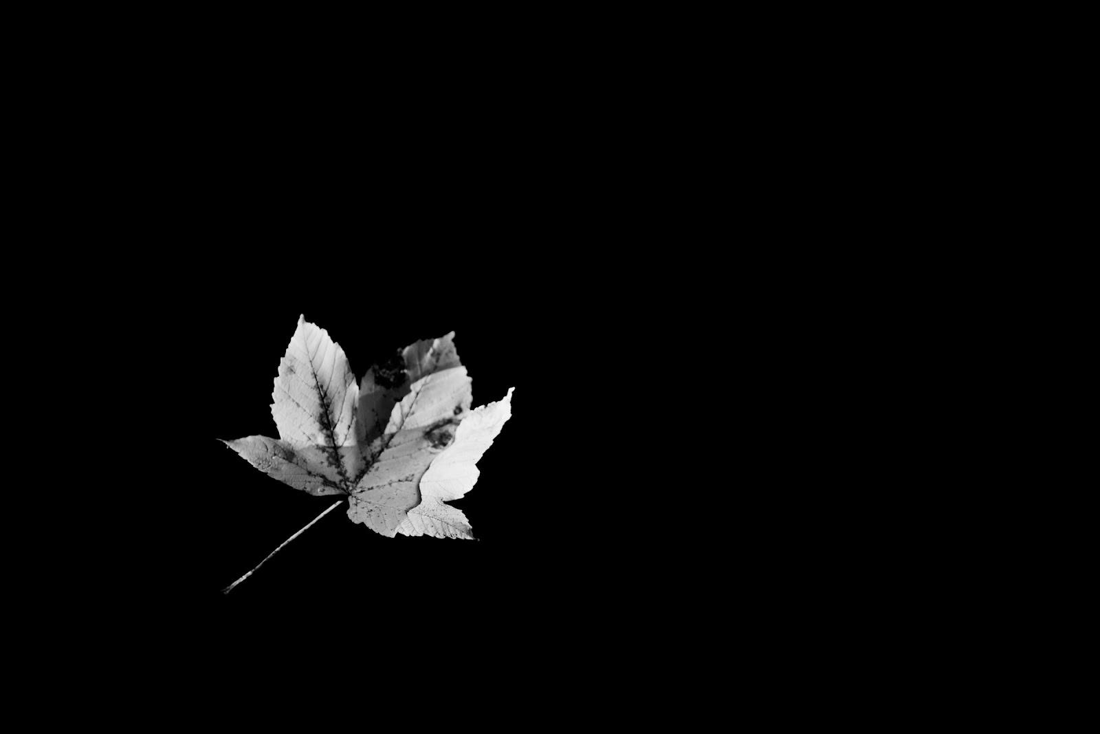 Image automne noir et blanc