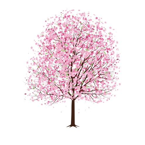 cherry tree drawing in blossom. cherry tree blossom drawing.