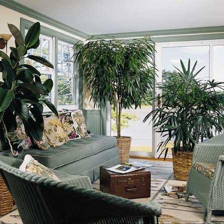 Φυτά εσωτερικού χώρου: διακοσμούν και