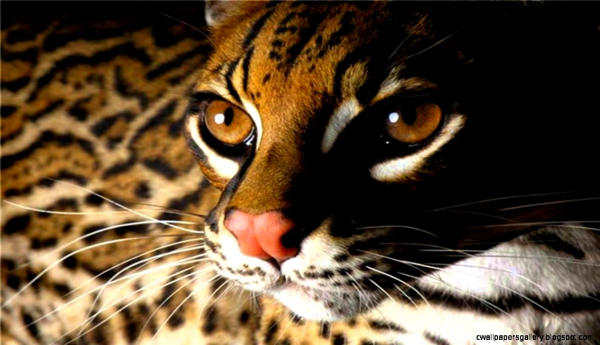 Beautiful Animals Cool Set Of Wild Animal Wallpapers YouTube