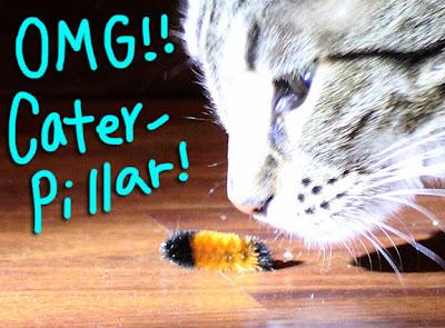 caterpillar-01