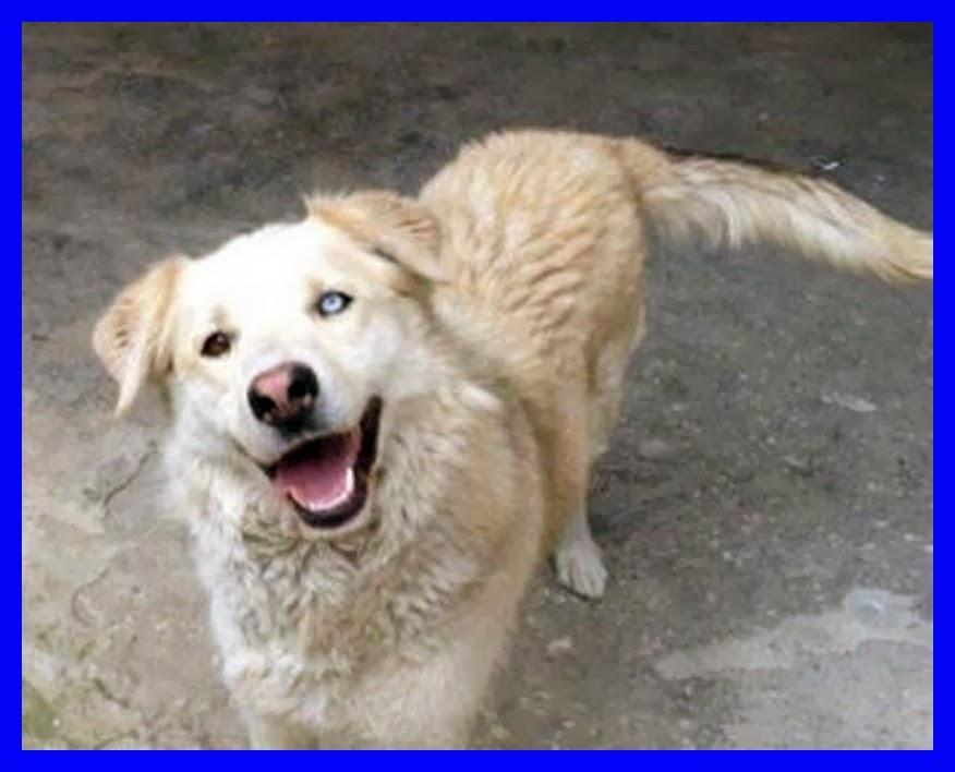 Celestino,il cane che sogna di VIVERE