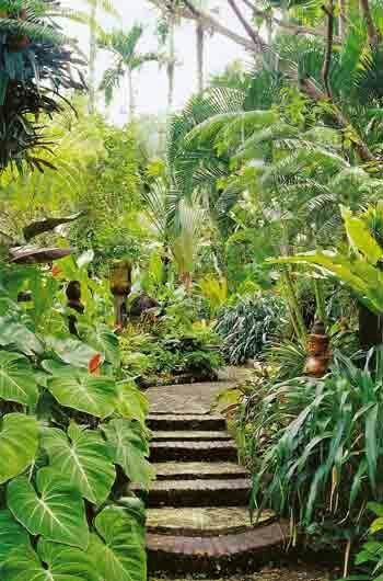 Plants and gardening gardening things for Tropical backyard design ideas