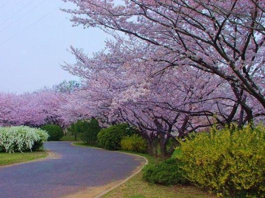/**جمال الطبيعة في فصل الربيع**\