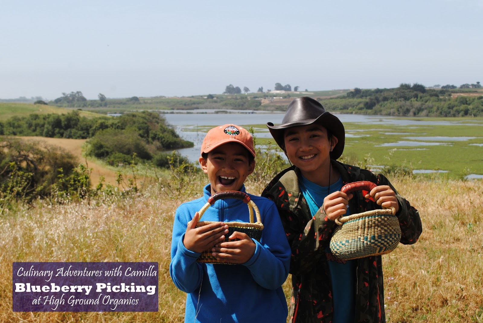 blueberry picking at harkins slough