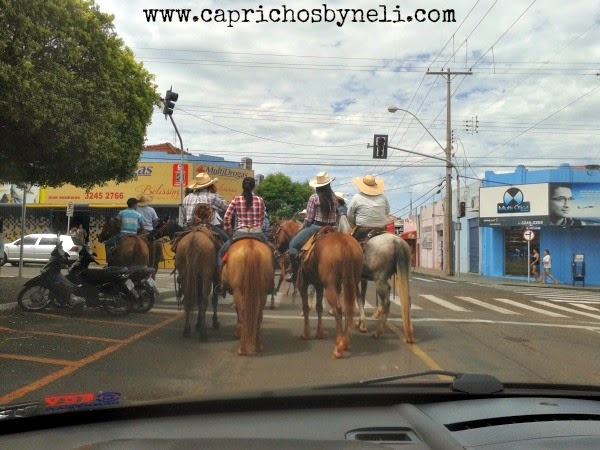 cavalos, cavalgada