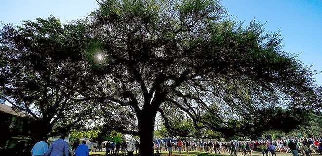 Covering Dixie: Gene Stallings, Mark and Jon Richt, LSU recruiting, and the Eisenhower Tree remembered.
