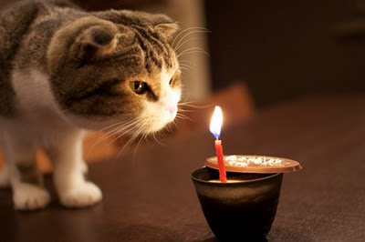kamar-asik.blogspot.com - Ekspresi kucing lagi galau gan