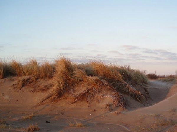 Protecci n de dunas costeras for Juzgado de dolores