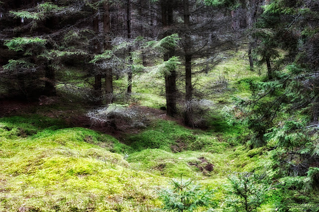 autumn, jesień, polska, poland, przyrosa, natura, natureinpoland, polska przyroda, zieleń, las, bory tucholskie, agata raszke
