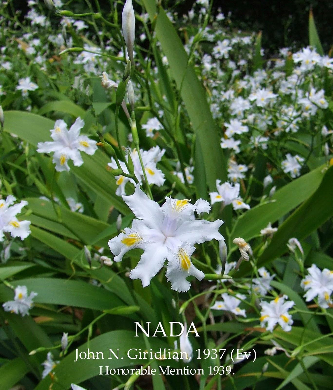 Iris Evansia Iris Japonica Crested Iris Nada Heritage Irises