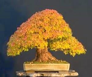 """<img src=""""BONSAI19.jpg"""" alt=""""foto bonsai"""">"""