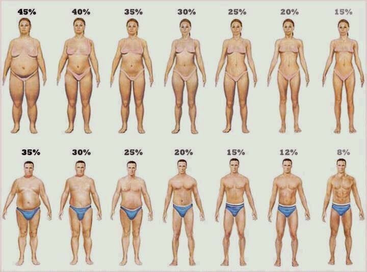 how fast can i reduce body fat percentage