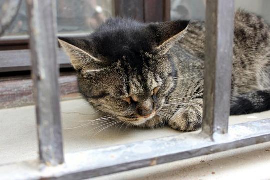 Cat from Venice, Italy