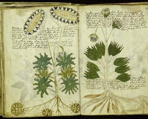 Voynich Manuscript pic