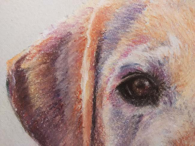 Detalle de retrato de perro